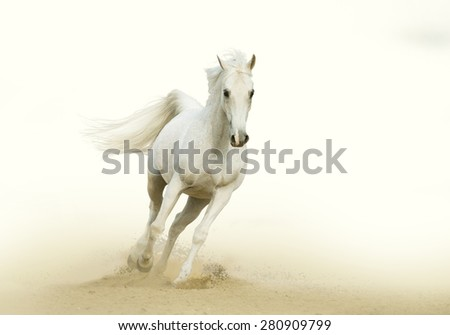 white horse gallop in a desert - stock photo