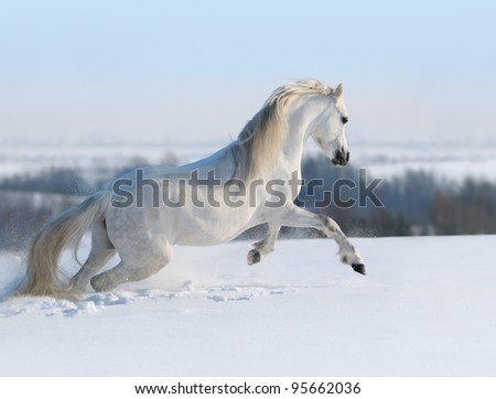 White horse galloping on snow hill