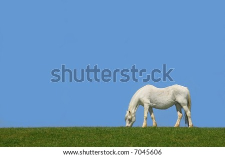 White horse grazing alone in a field against a clear blue sky.