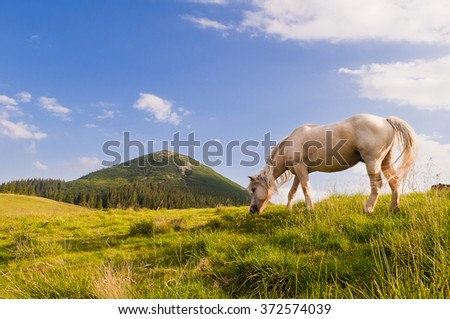 White horse grazing in the meadows of the Carpathians