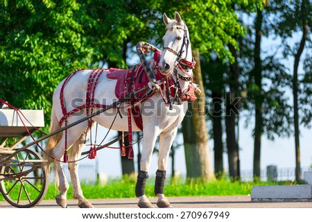 white horse harnessed, stands on the sunny street - stock photo