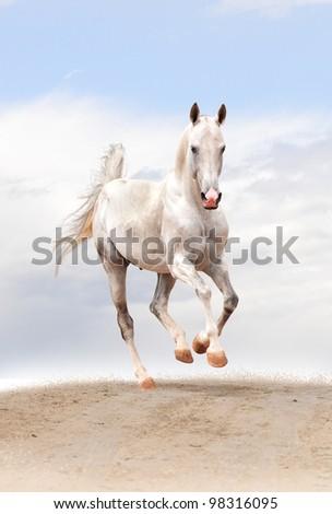 white horse in a desert - stock photo