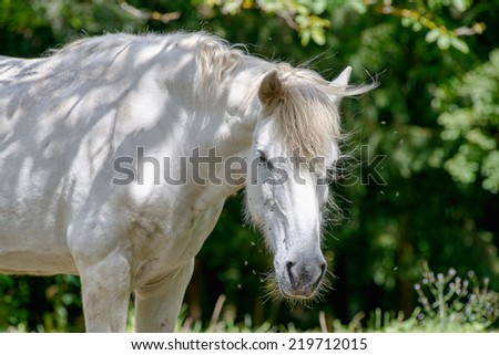white horse in a field with trees - stock photo