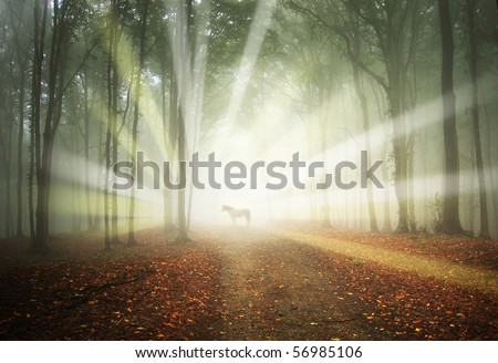 white horse in a magical forest with sun rays and fog between trees - stock photo