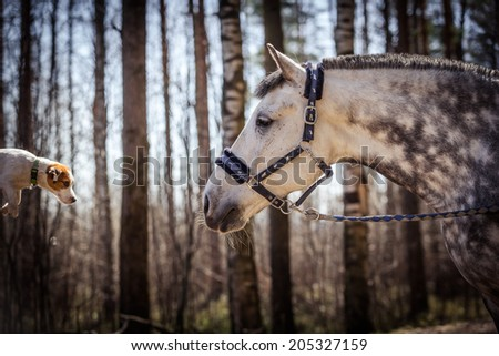 white horse in a spot - stock photo