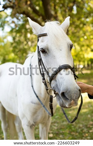 White Horse in a summer garden - stock photo