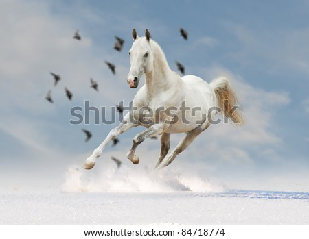 white horse in blue skies - stock photo