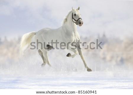 white horse in snow - stock photo