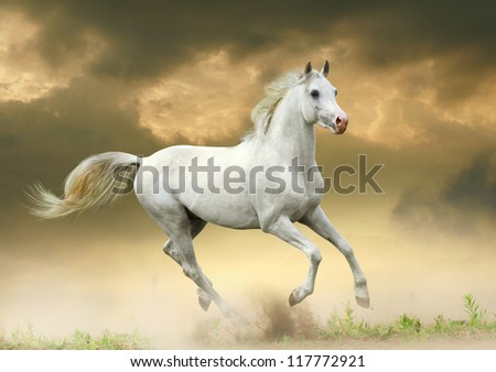 white horse in sunset - stock photo