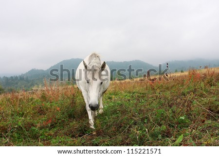 White horse in the grass against the misty hills - stock photo