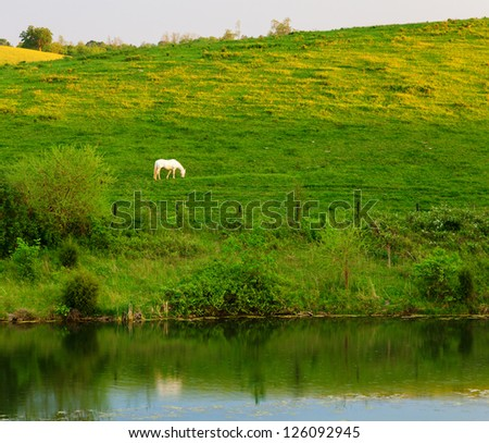 White horse in the pasture - stock photo