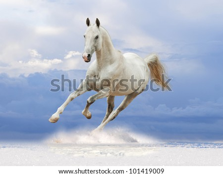white horse in the snow - stock photo
