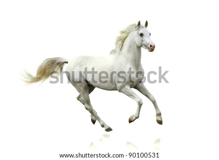 white horse isolated - stock photo