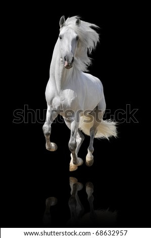 white horse isolated on black - stock photo