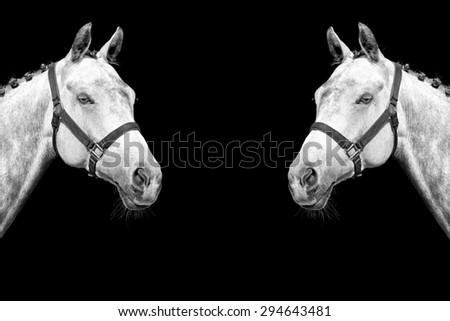 White horse isolated on the black background - stock photo