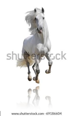 white horse isolated on white - stock photo