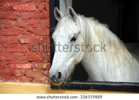 White Horse Looking - stock photo