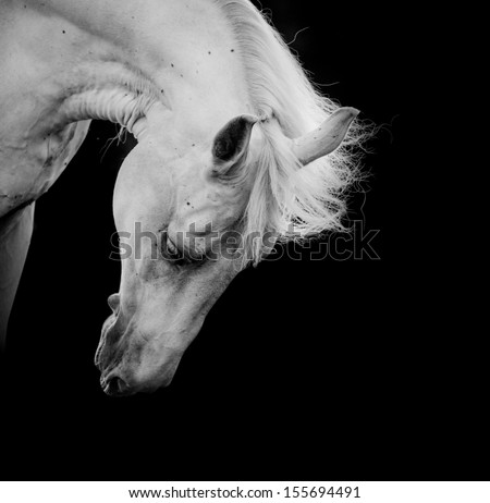 white horse on a black - stock photo