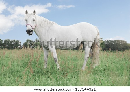 white horse on a meadow in the background a blue sky - stock photo