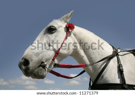 white horse on background blue sky with red flower - stock photo