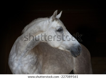 white horse on black background - stock photo
