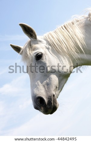 White horse on blue sky background