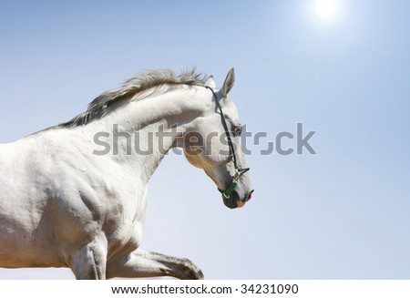 white horse on blue sun background - stock photo