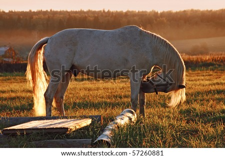 White horse on field - stock photo