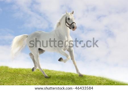 white horse on grass - stock photo