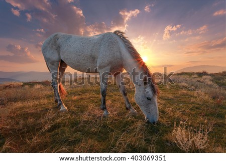 White horse on mountain pasture at sunrise time. - stock photo