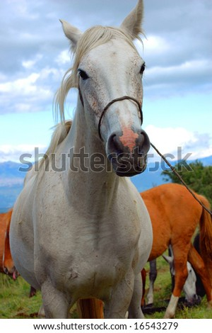 white horse on the field - stock photo