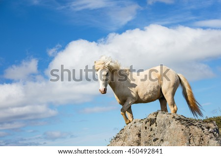 white horse on the rock with sky view in Iceland