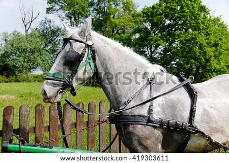 White horse portrait - stock photo