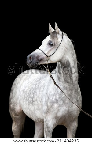White horse portrait on black background - stock photo