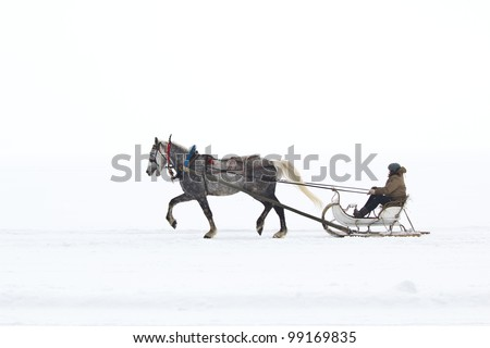 White horse pulling sleigh - stock photo