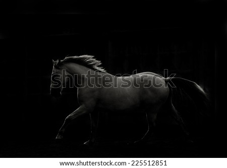 white horse run in dark - stock photo
