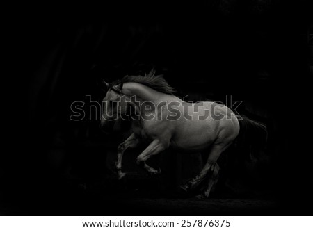 white horse run in dark running  - stock photo