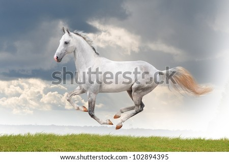 white horse running free in summer