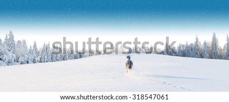 White horse running in winter landscape with forest
