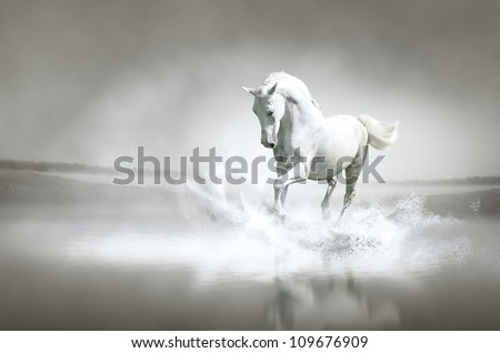 White horse running through water - stock photo