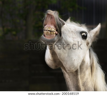 White horse smiling  - stock photo