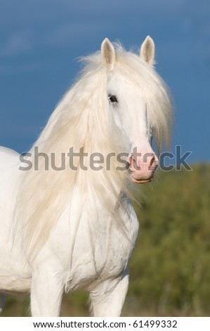 white horse stallion and storm clouds - stock photo