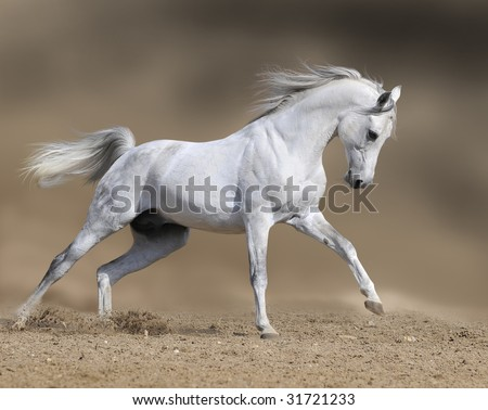 white horse stallion runs gallop in dust desert, collage paint - stock photo