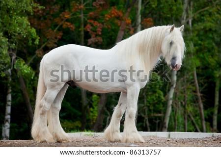 White horse standing - stock photo