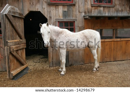 white horse standing in front of barn