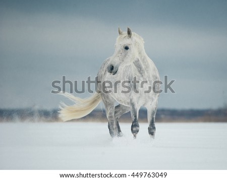 white horse standing in the snow - stock photo