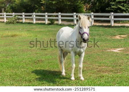 White horse standing on green grass. - stock photo