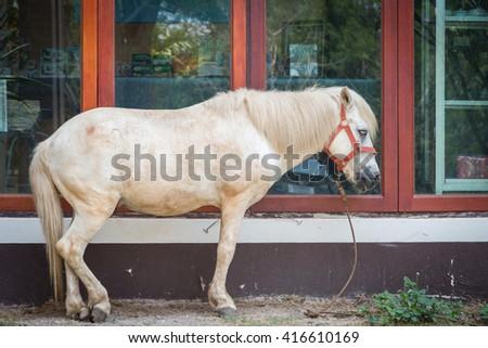 White Horse stans near the windows background - stock photo