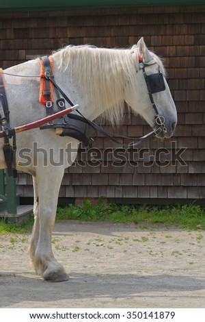 White Horse With Blinders - stock photo
