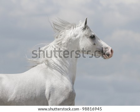 white horse with blue sky behind - stock photo